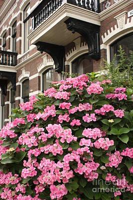 Hydrangeas In Holland Art Print by Carol Groenen