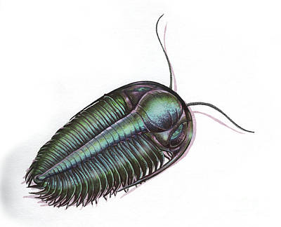 Hydrocephalus Digital Art - Hydrocephalus Trilobite by Jan Sovak