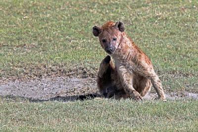 Photograph - Hyena by Tony Murtagh