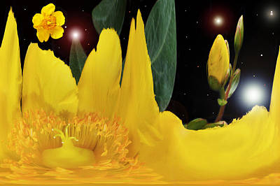 Photograph - Hypericum Galaxy. by Terence Davis