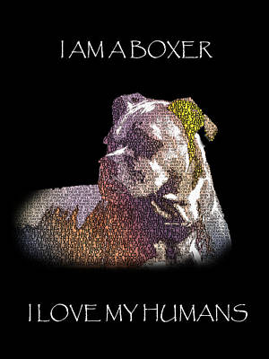 Photograph - Dog - Boxer - Pet - I Am A Boxer by Barry Jones