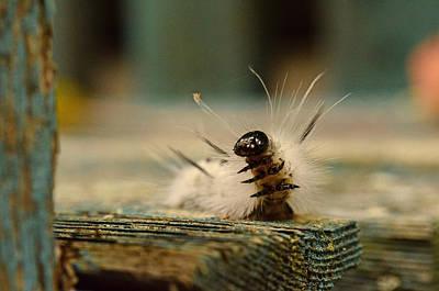 Photograph - I Am A Caterpillar by Lori Tambakis