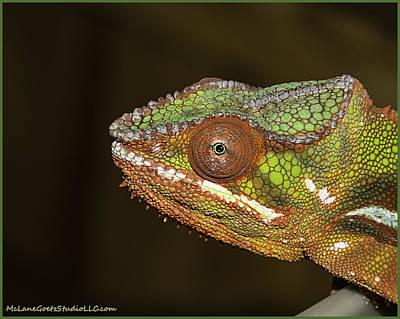 Tail Photograph - I Am A Chameleon  by LeeAnn McLaneGoetz McLaneGoetzStudioLLCcom