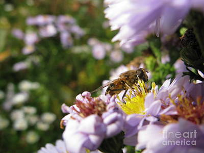 Photograph - I Am A Little Busy Bee by Ausra Huntington nee Paulauskaite