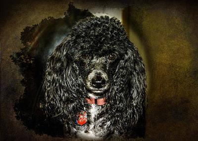 Photograph - I Am Alpha by Judy Hall-Folde