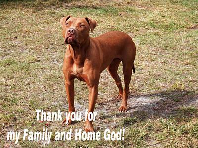 Photograph - I Am Grateful Pitbull  by Belinda Lee