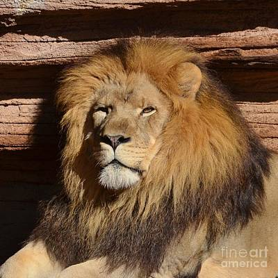 Photograph - I Am King II by Kathy Baccari
