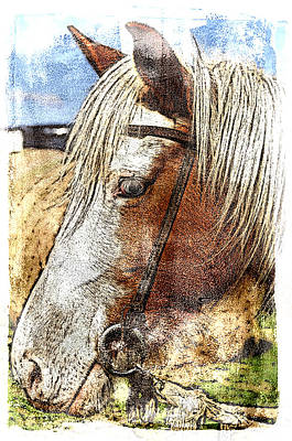 Photograph - I Am Mister Ed by Davina Washington