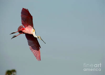 Titusville Photograph - I Am Not A Pink Flamingo by Sabrina L Ryan