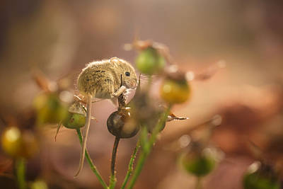 Small Rodents Photograph - I Am Small by Izzy Standbridge