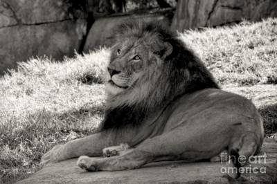 Photograph - I Am The King by Peggy Hughes