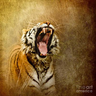 Tiger Digital Art - I Am Woman Hear Me Roar by Betty LaRue