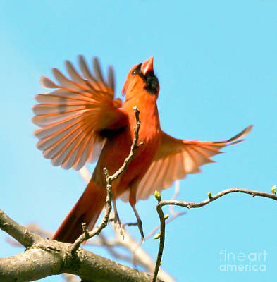 Photograph - I Believe I Can Fly by Kerri Farley