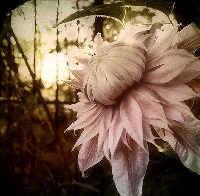 Print featuring the photograph I Bloom Only For You She Whispered by Susan Maxwell Schmidt