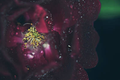Stamen Photograph - I Can Feel Your Heart Beating by Laurie Search