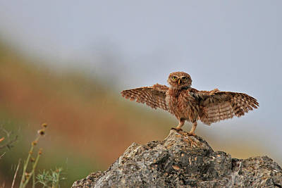Wild Animals Photograph - I Can Fly..!!!!!! by Muayad Amer