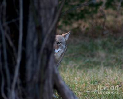 Photograph - I Can Still See You by Michael Creamer
