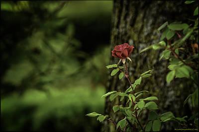 Chicago Photograph - I Come To The Garden Alone by LeeAnn McLaneGoetz McLaneGoetzStudioLLCcom