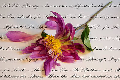 Stellar Interstellar Royalty Free Images - I Died for Beauty Royalty-Free Image by Nancy Helmer
