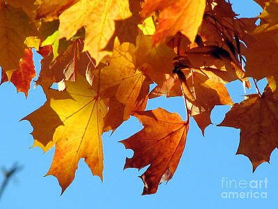 Photograph - I Do Love Autumn by Chris Anderson