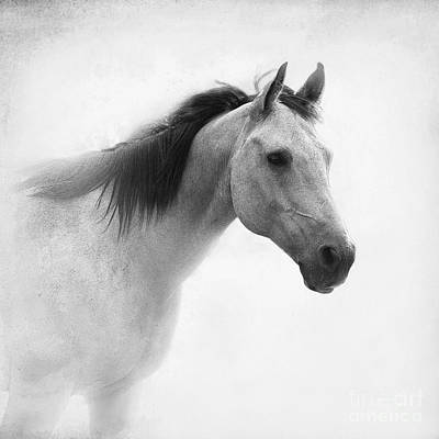 Quarter Horse Photograph - I Dream Of Horses by Betty LaRue