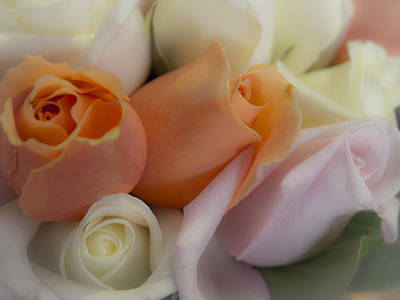 Justin Woodhouse Photograph - I Dream Of Roses by Kaleidoscopik Photography