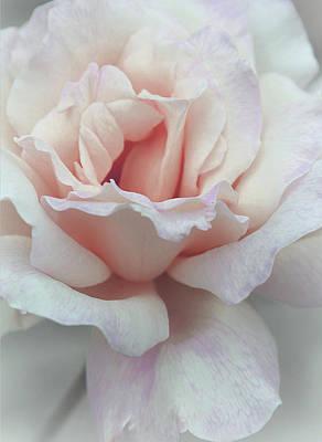 Feminine Photograph - I Dream Of Roses by The Art Of Marilyn Ridoutt-Greene