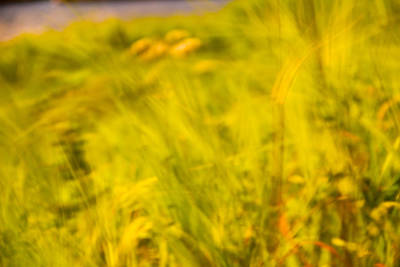 Photograph - I Dream Of Summer by Kunal Mehra