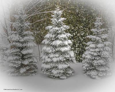 Frank Sinatra - I dream of Trees by LeeAnn McLaneGoetz McLaneGoetzStudioLLCcom
