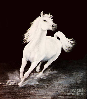 Arabian Horses Painting - I Dreamed Him White by DiDi Higginbotham
