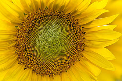 Sunflower Photograph - I Got Sunshine by Susan Candelario