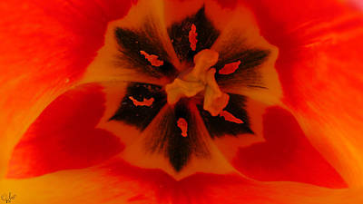 I Have A Dream... Into A Tulip. Art Print by Sascha Kolek