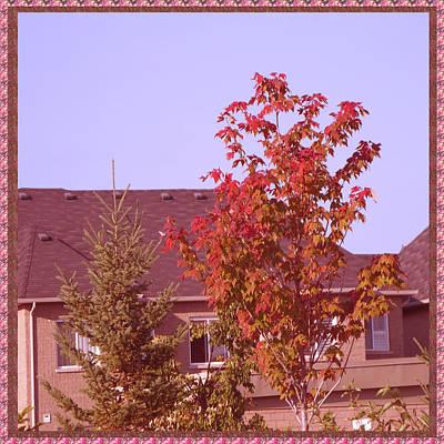 Mixed Media - I Have Company Lone Fall Color Showing Tree Clicks By Navinjoshi by Navin Joshi