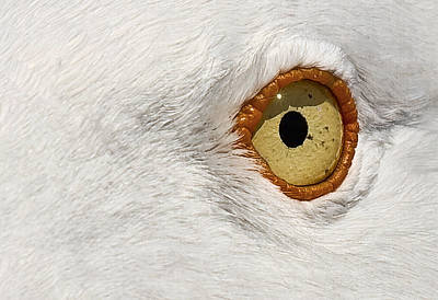 Staring Photograph - I Have My Eye On You by Marcia Colelli