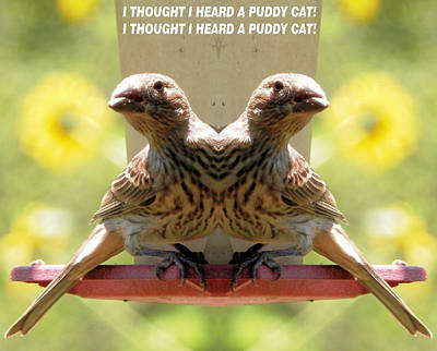 Photograph - I Thought I Heard A Puddy Cat by Belinda Lee