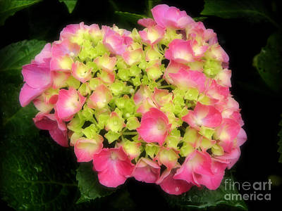 Photograph - I Heart Hydrangeas by Sharon Woerner