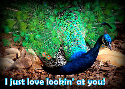 Photograph - I Just Love Lookin' At You by Amber Joy Eifler