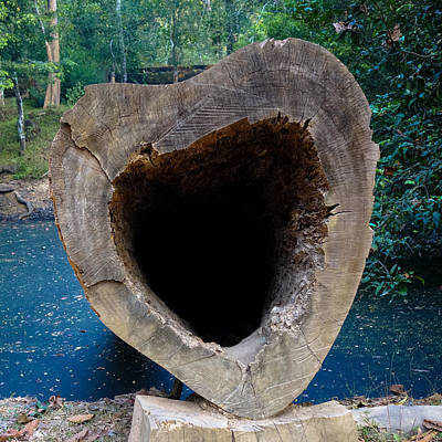 Funny Tree Shapes Photograph - I Left My Heart In Cambodia by Lauren Rathvon