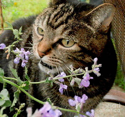 Photograph - I Love Catnip My Mommy Grows For Me by Eunice Miller