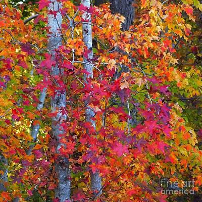 I Love Fall Art Print by Scott Cameron