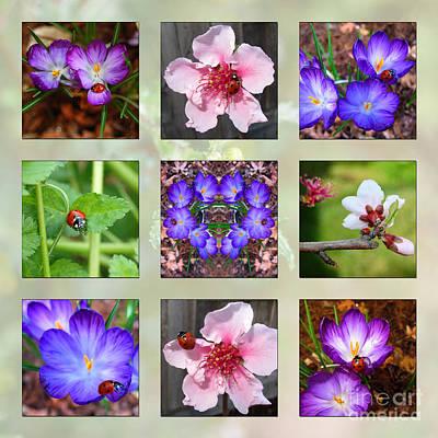 Photograph - I Love Ladybugs by Debra Thompson