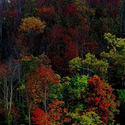 Photograph - I Love October by Eric Switzer