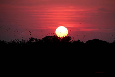 Photograph - I Love Sunsets Three by Ericamaxine Price