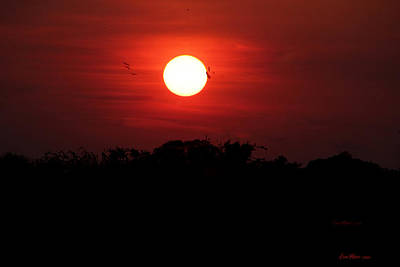 Photograph - I Love Sunsets Two by Ericamaxine Price