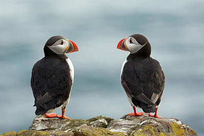 Puffin Photograph - I Love You - I Love You Too by Milan Zygmunt