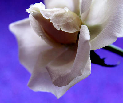 White Flower Photograph - I Love You by Krissy Katsimbras