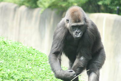Pittsburgh Zoo Photograph - I Mean Business by Starla Perdew