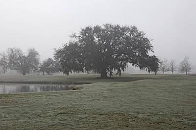 Photograph - I Saw In Louisiana by Cheri Randolph
