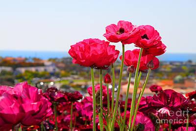 Photograph - I Sea The Sea - Ranunculus Flowers By Diana Sainz by Diana Raquel Sainz