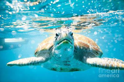 Sea Turtle Photograph - I Sea You by Matteo Colombo